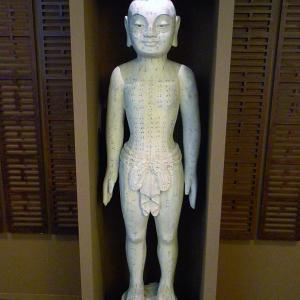 Modello di corpo umano