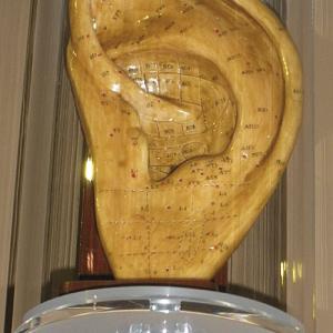 Modello di orecchio sinistro