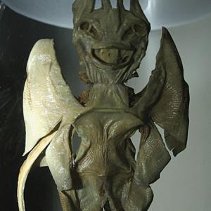 Garadiavolo (Pteroplatytrygon, famiglia Dasyatidae)