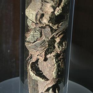Kaphal (Myrica esculenta, famiglia Myricaceae)