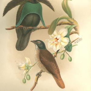 Libro - Alla Nuova Guinea